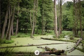 die grüne Weite im Wildgehege Moritzburg